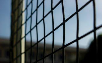 Заборная сетка